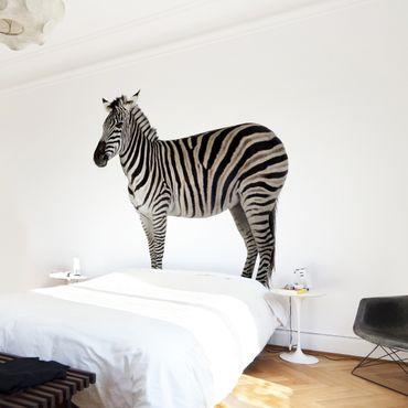 Carta da parati - Chubby Zebra