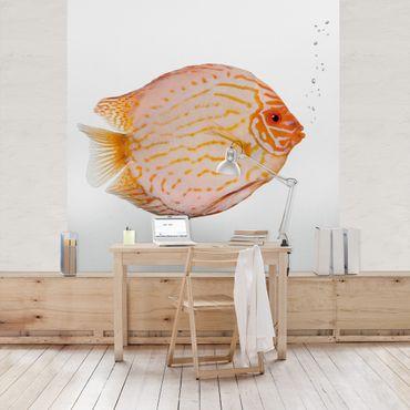 Carta da parati - Discus fish