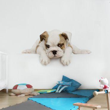Carta da parati - poco Bulldog