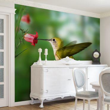 Carta da parati - Hummingbird And Blossom