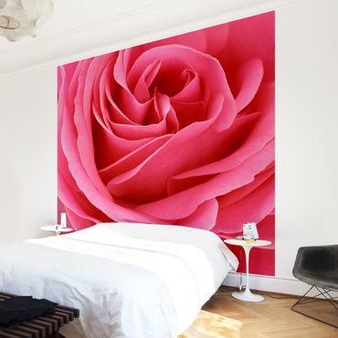 Carta da parati - Lustful Pink Rose
