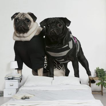 Carta da parati - Pug Fashion