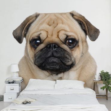 Carta da parati - Portrait Of Pug
