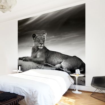 Carta da parati - Resting Lion