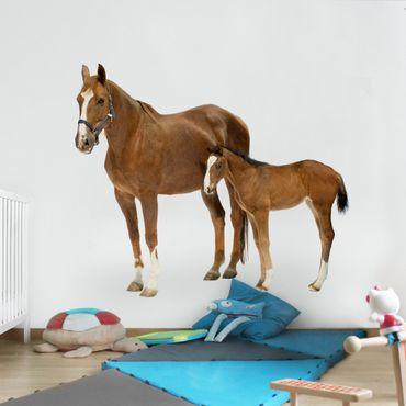 Carta da parati - Mare & Foal