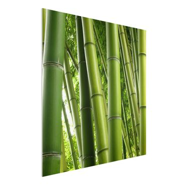 Quadro in forex - Bamboo Trees No.1 - Quadrato 1:1