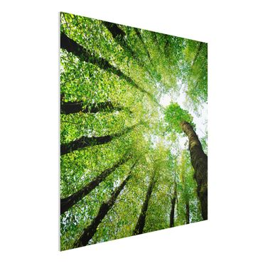 Quadro in forex - Trees Of Life - Quadrato 1:1