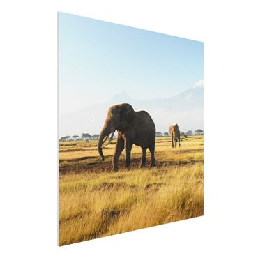Quadro in forex - Elephants in front of the Kilimanjaro in Kenya - Quadrato 1:1