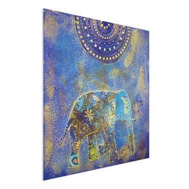 Quadro in forex - Elephant in Marrakech - Quadrato 1:1