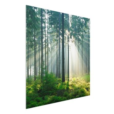 Quadro in forex - Enlightened Forest - Quadrato 1:1