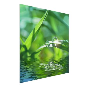 Quadro in forex - Green Ambiance II - Quadrato 1:1