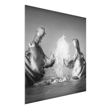 Quadro in forex - Hippo Fight - Quadrato 1:1