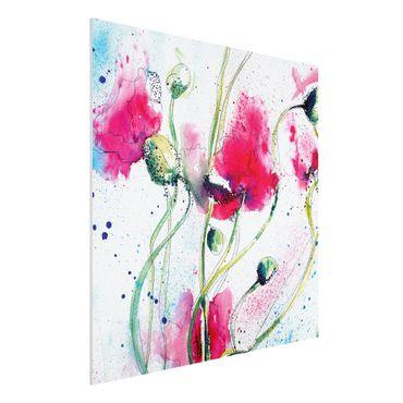 Quadro in forex - Painted Poppies - Quadrato 1:1