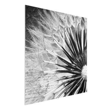 Quadro in forex - Dandelion Black & White - Quadrato 1:1