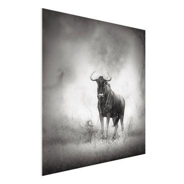 Quadro in forex - Staring Wildebeest - Quadrato 1:1
