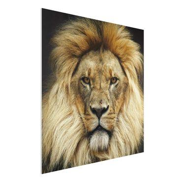 Quadro in forex - Wisdom of Lion - Quadrato 1:1