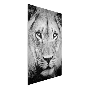Quadro in forex - Old lion - Verticale 2:3