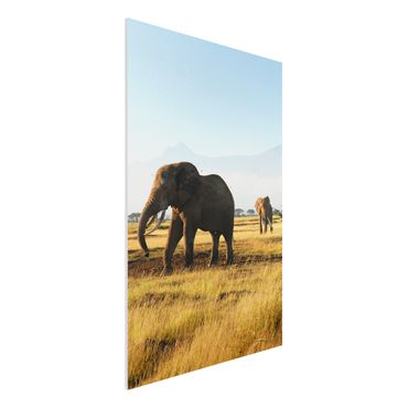 Quadro in forex - Elephants in front of the Kilimanjaro in Kenya - Verticale 2:3