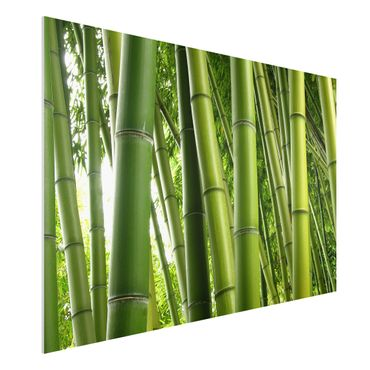 Quadro in forex - Bamboo Trees No.1 - Orizzontale 3:2