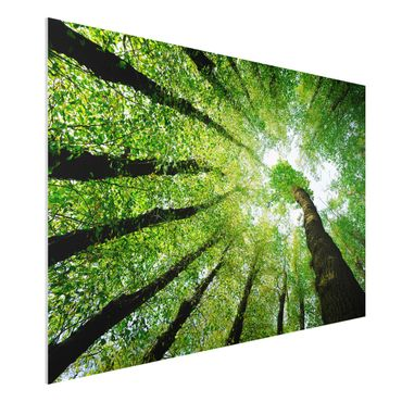 Quadro in forex - Trees Of Life - Orizzontale 3:2