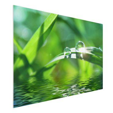 Quadro in forex - Green Ambiance II - Orizzontale 3:2