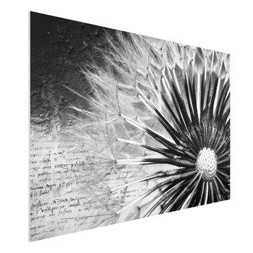 Quadro in forex - Dandelion Black & White - Orizzontale 3:2