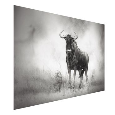 Quadro in forex - Staring Wildebeest - Orizzontale 3:2