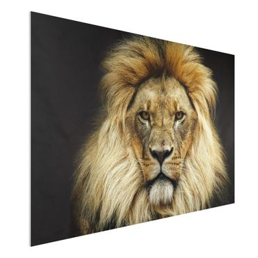 Quadro in forex - Wisdom of Lion - Orizzontale 3:2