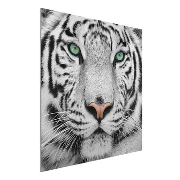 Quadro in alluminio - White Tiger