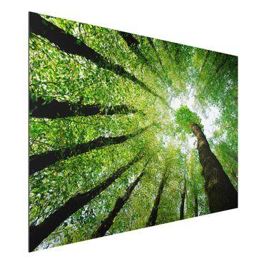 Quadro in alluminio - Trees Of Life