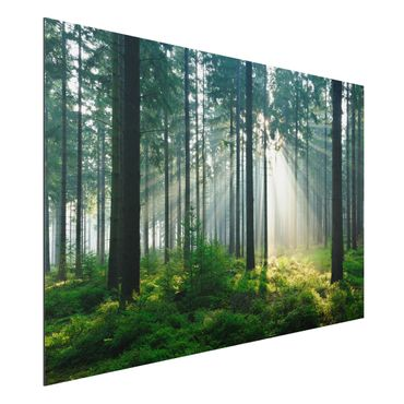 Quadro in alluminio - Enlightened Forest