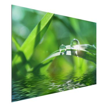 Quadro in alluminio - Green Ambiance II