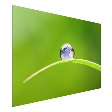 Quadro in alluminio - Green Hope