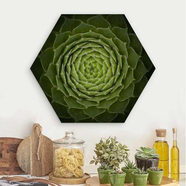 Esagono in legno - Mandala Succulente