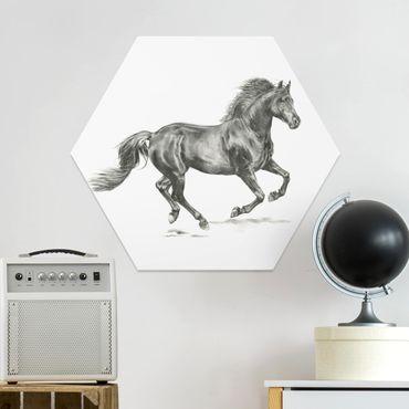 Esagono in forex - Wild Horse Trial - Stallion