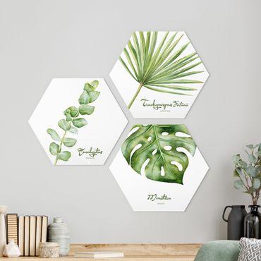 Esagono in Alu-dibond - Acquerello Botanica