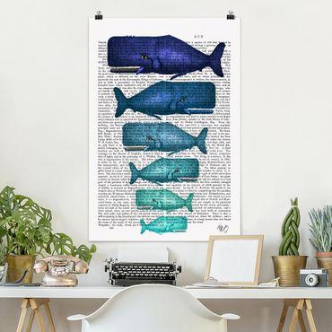 Poster - Lettura di animali - Famiglia Whale - Verticale 3:2