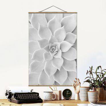 Foto su tessuto da parete con bastone - Cactus Succulente - Verticale 3:2