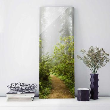 Quadro in vetro - Misty forest path - Pannello