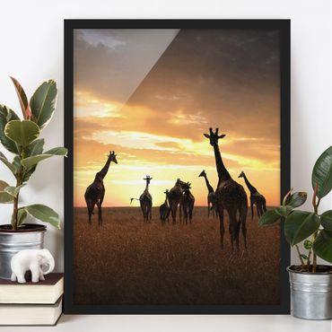 Poster con cornice - Giraffe Family - Verticale 4:3