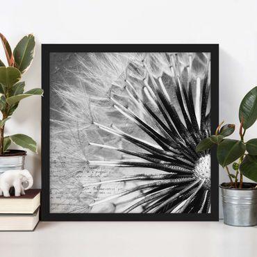 Poster con cornice - Dandelion Black & White - Quadrato 1:1