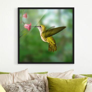 Poster con cornice - Hummingbird And Blossom - Quadrato 1:1