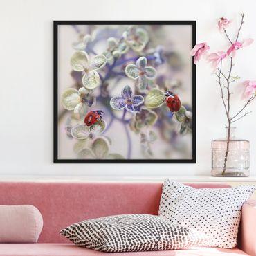 Poster con cornice - Ladybug In The Garden - Quadrato 1:1