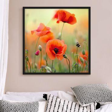 Poster con cornice - Red Summer Poppy - Quadrato 1:1
