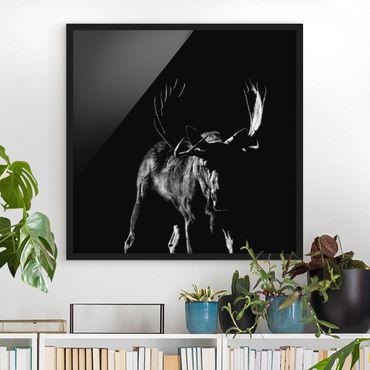 Poster con cornice - Bull In The Dark - Quadrato 1:1