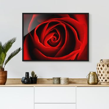 Poster con cornice - Lovely Rose - Orizzontale 3:4