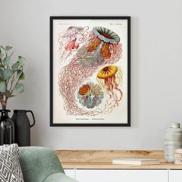 Poster con cornice - Vintage Consiglio Jellyfish - Verticale 4:3