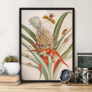 Poster con cornice - Anna Maria Sibylla Merian - Ananas con Insetti - Verticale 4:3