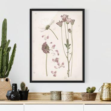 Poster con cornice - Herbarium In Rosa II - Verticale 4:3