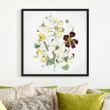Poster con cornice - British Butterflies II - Quadrato 1:1